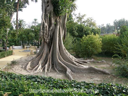 Parques en la ciudad de Sevilla (Jardines de Murillo)